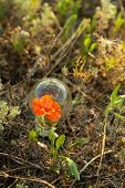 Light bulb with flower inside on grass background.