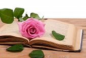The Rose On The Book Close-up
