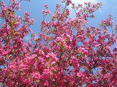 Petally Pinkness