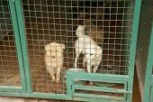 picture of stray dog  - Abandoned dogs in dogs shelter is waiting for a new owners - JPG