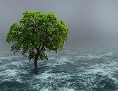 Tree in water.