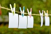 Blank pieces of paper hang on clothesline on green garden  background