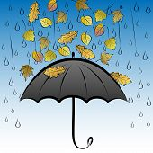 Autumn leaves and umbrella