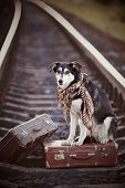 stock photo of dogging  - Dog on rails with suitcases - JPG