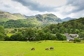 Country scene Seatoller Borrowdale Valley Lake District Cumbria England UK