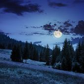 Coniferous Forest On A  Mountain Slope In Moon Light