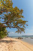Coconut island beach of Nai Yang Koh Phuket in Thailand