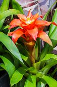 Bromeliad Simulated  Tropical Forest