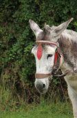 Friendly Donkey.