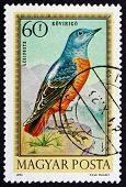 Postage Stamp Hungary 1973 Blue Rock Thrush, Bird