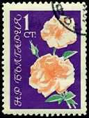 Vintage  Postage Stamp. The Flowerses Of The Rose On Turn Blue The Background.