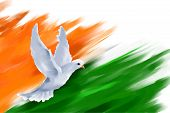 image of indian independence day  - illustration of dove flying on Indian Flag for Indian Republic Day - JPG
