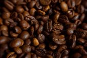 picture of coffee coffee plant  - Coffee on grunge wooden background Fresh coffee beans on wood and linen bag ready to brew delicious coffee - JPG