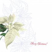 image of poinsettia  - Watercolor background  with poinsettia - JPG