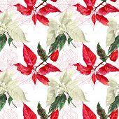 Seamless pattern  with red poinsettia plant