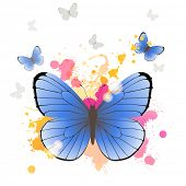 Azure butterfly over bright background