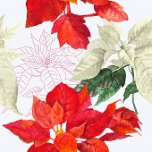 Seamless pattern  with red poinsettia plan