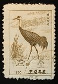 North Korea - 1965: Postal Stamp Printed In North Korea Shows An Image Of An Heron Egret On A White