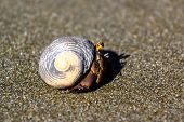 stock photo of hermit  - A hermit crab is walking on the coast in sand - JPG