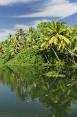 image of alleppey  - Coco trees reflection at back waters of Kerala India - JPG