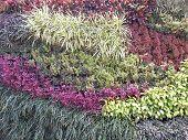 Vertical Garden Wall Texture