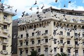 picture of aristoteles  - Pigeons flying over a building in square Aristotelous in Thessaloniki Greece - JPG