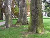 three old trees