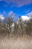 image of forlorn  - Early spring in an old orchard on the hill - JPG