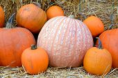 pic of fall decorations  - some pumpkin with hay for Fall decoration at market place - JPG