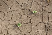 stock photo of mud  - Sprouts fighting for life with natural forces in dried cracked mud - JPG