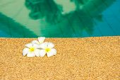 image of plumeria flower  - beautiful tropical Plumeria flowers on swimming pool with reflection water closeup - JPG