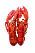 picture of lobster tail  - Close up Two Cooked Red Lobsters Standing Next to Each Other Isolated on a White Background - JPG