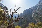 image of samaria  - At the entrance of the gigantic Samaria Gorge - JPG
