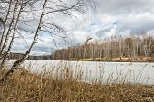 picture of birching  - Spring landscape with birch trees and a river covered with ice - JPG