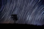 picture of north star  - The Stars night of startails over tree - JPG