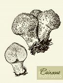 image of mushroom  - Set of linear drawing mushrooms - JPG