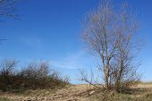 The Coast Of Finnish Gulf