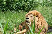 Lions 16