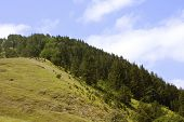Kiefernwald