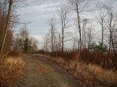 Late Autumn Lane