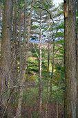 New England Wood