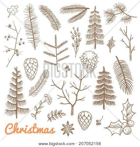 poster of Hand drawn fir and pine branches, fir-cones. Christmas and winter holidays doodle vector design elements. Branch of pine and evergreen plant illustration