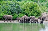 The lagoon of elephants