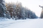 Beautiful Winter Snow Forest With Snow Covered Trees. Winter Of 2018 poster