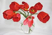 Red Tulips In Glass Vase