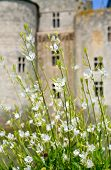 White Flowers In Front Of Medieval Castle