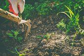 Gardening Weeding Weeds. Gardening On The Photo. poster