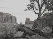 picture of american indian  - the tree and monument valley - JPG