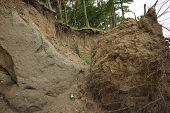 Slide Soil Erosion, Row of Trees Exposed to Seaside Cliff Face Erosion with Crumbling Earth and Dirt poster