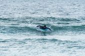 A Middle Aged Man Doing Some Foil Surfing Or Hydrofoil Surfing In The Sea. poster